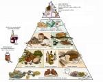 <!--:it-->La Piramide del mangiare sano<!--:--><!--:en-->La Piramide del mangiare sano<!--:-->