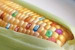 La verità sugli OGM